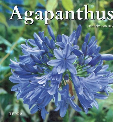 Agapanthus - Hanneke van Dijk
