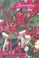 Dendroflora Special Klimmende Kamperfoelies